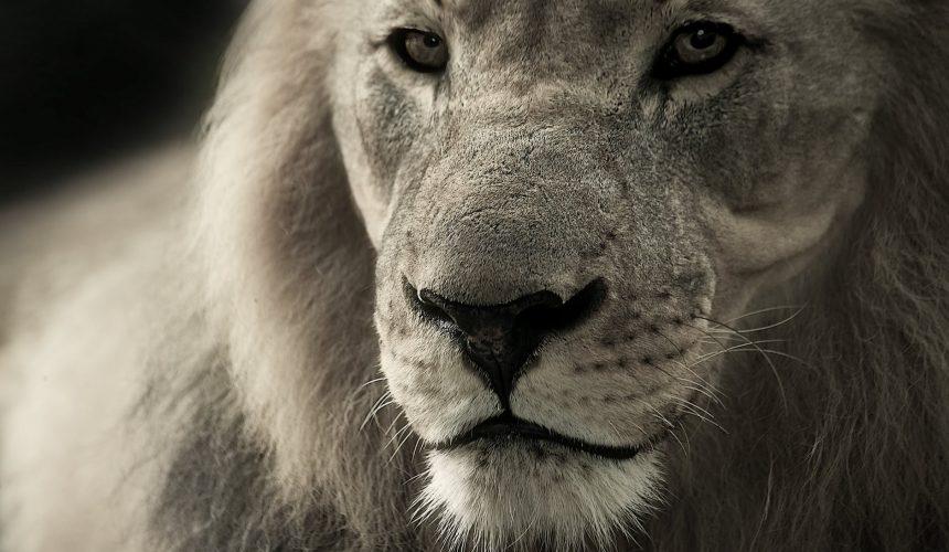 Thy Kingdom Come: The Kingdom Triumphant